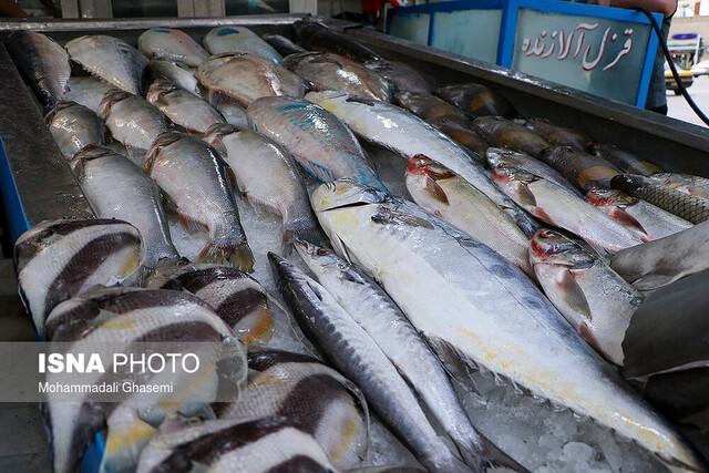 چه میزان ماهی در خراسان رضوی تولید می شود؟